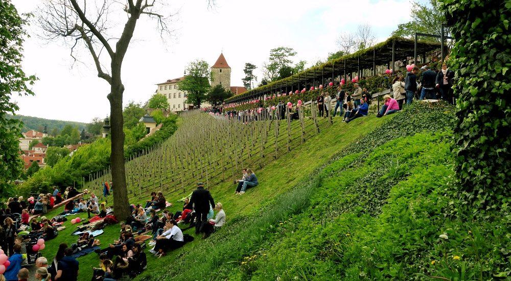 Svátek růžových vín v Praze